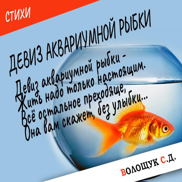 Девиз аквариумной рыбки